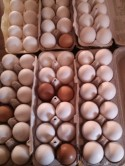 Our pasture produced, free range eggs.